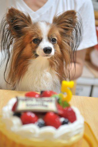 カミーユ 5歳の誕生日